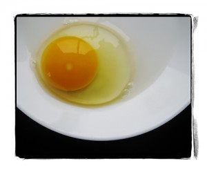 pasture raised egg lr