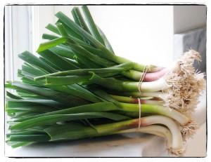 spring garlic js_ch